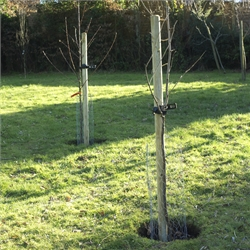 Tree Planting Packs