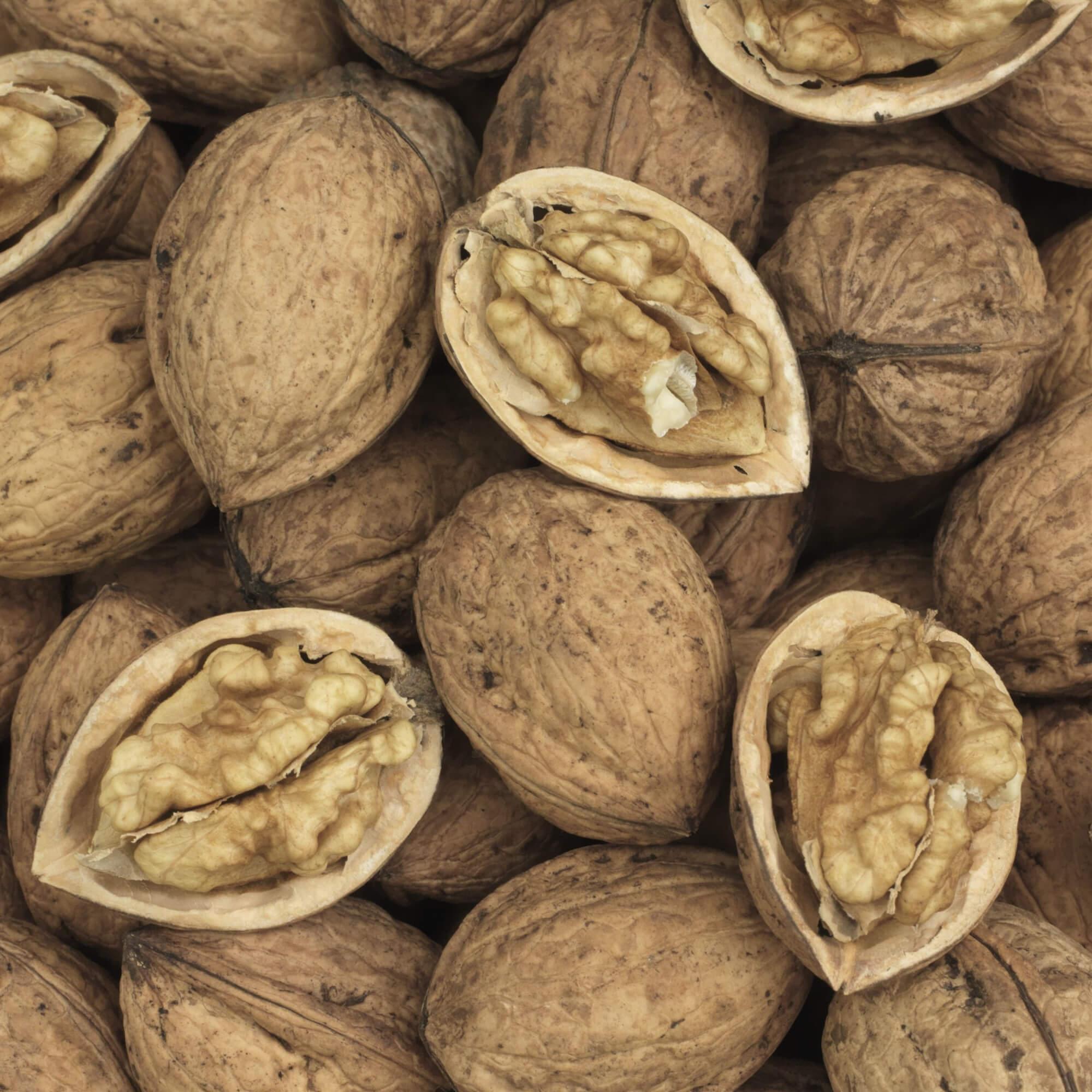 The Walnut Tree Company | Walnut Fruit Trees | Walnut Timber